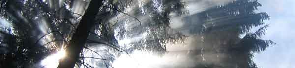 forest_sun